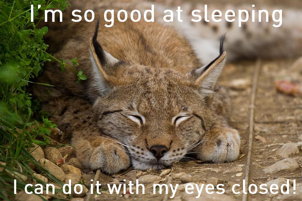 so-good-at-sleeping-2.jpg